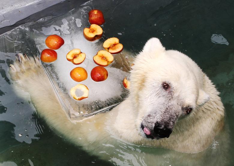 북극곰의 더위탈출? '남극이'는 여