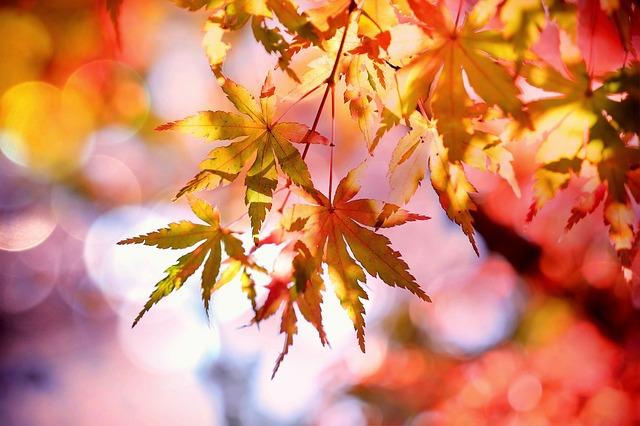 선선한 가을과 잘 어울리는 노래 추천