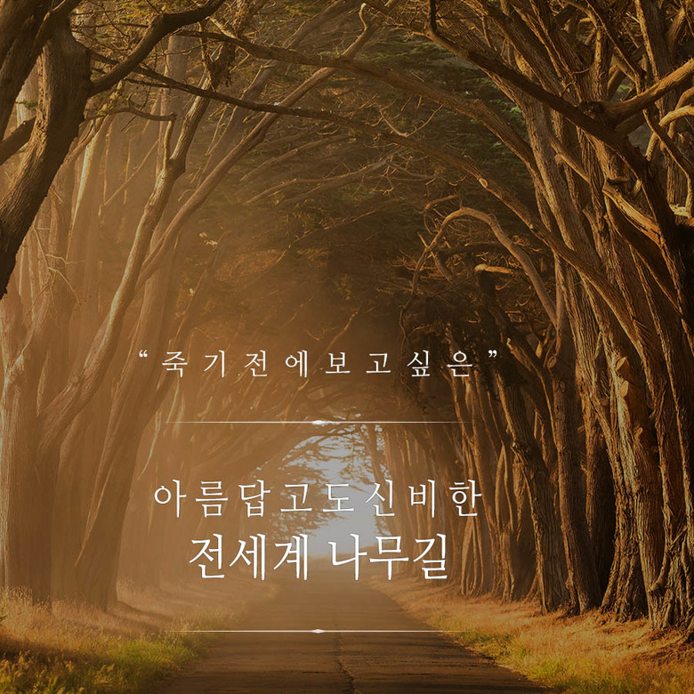 아름답고도 신비한 전세계 나무길