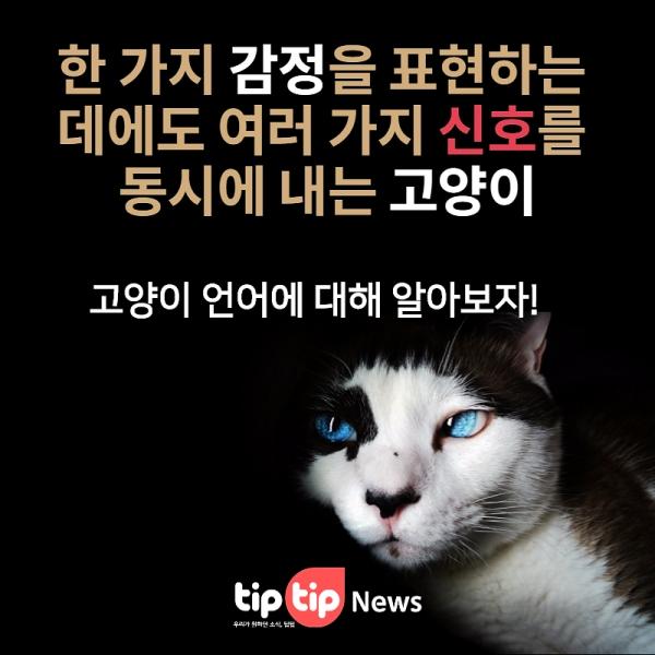 고양이 기분 확인하는 3가지 방법