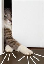 고양이 집사를 위한 책 BEST 4