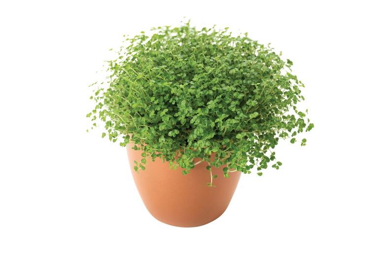 책상 위에 초록이 입양하세요
