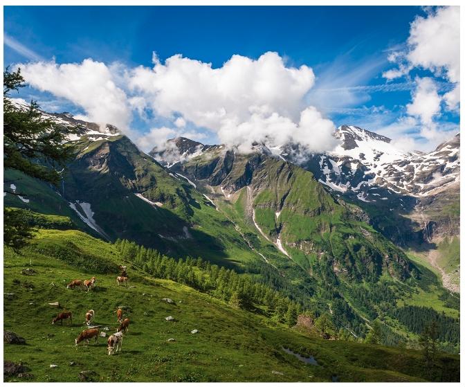 알프스 산맥을 배경으로 '오스트리아'