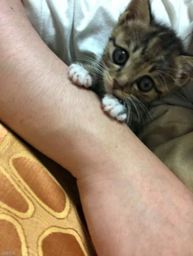 집사의 손가락과 사랑에 빠져버린 고양