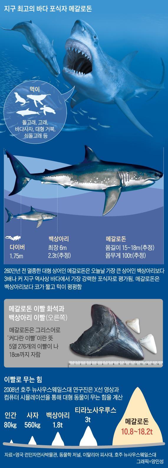 영화로 부활한 거대 상어 '메갈로돈'