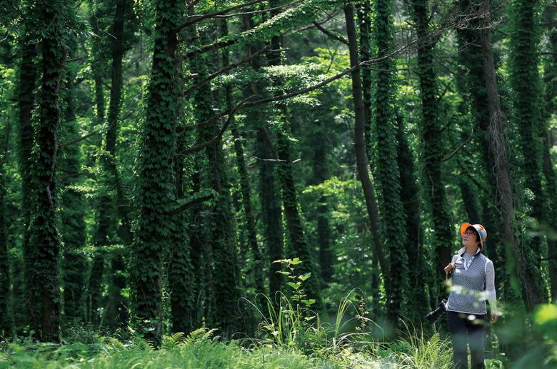 명품 숲길 품은 노로오름의 여름