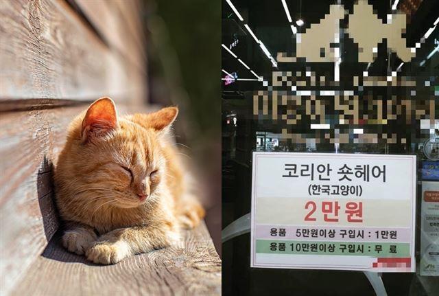 '물건 사면 공짜' 비난 쏟아진 고양