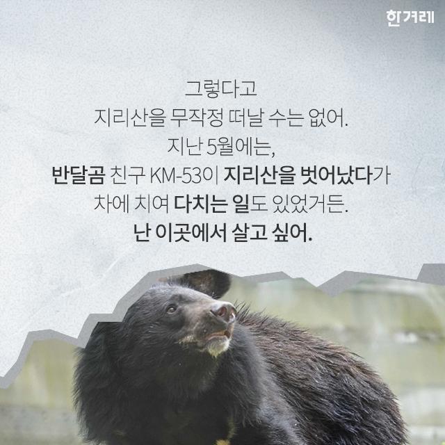 지리산 반달곰, 올 겨울은 어디서 자