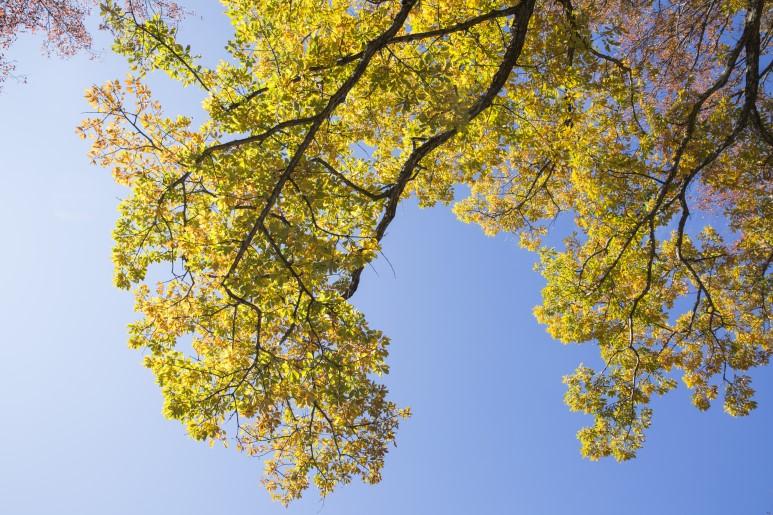 한라산 어리목코스- 제주 가을 단풍