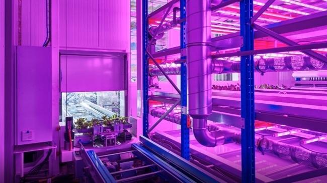 본사 내 로봇 자동화 작물 재배 시스템인 플랜트팩토리 내부