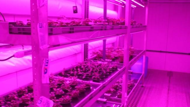 본사 내 작물 재배 및 레시피 연구 시설