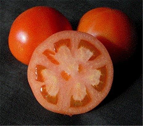 칼로 잘라내도 과즙이 흐르지 않게 개량한 토마토