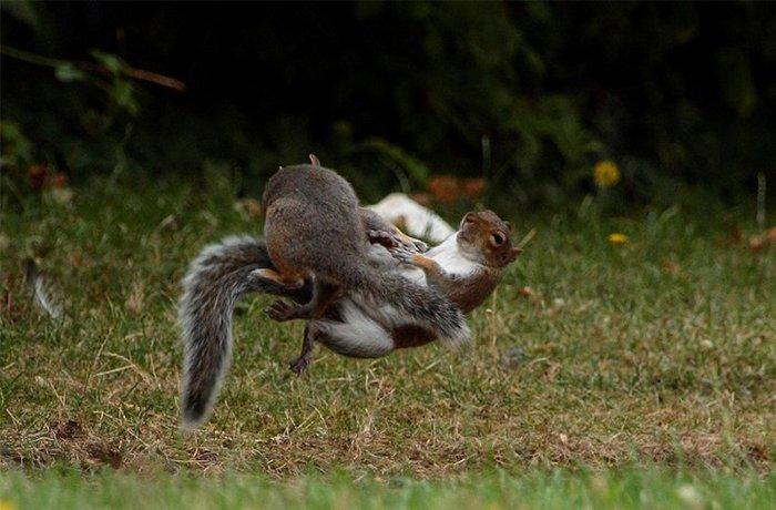 아마추어 사진가가 포착한 두 다람쥐의