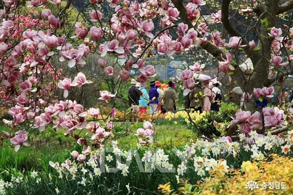 벚꽃도 좋고 유채꽃도 예쁘고, 봄 내
