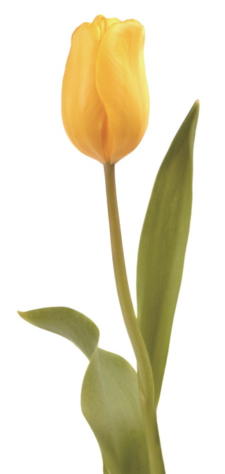 봄꽃을 찾아