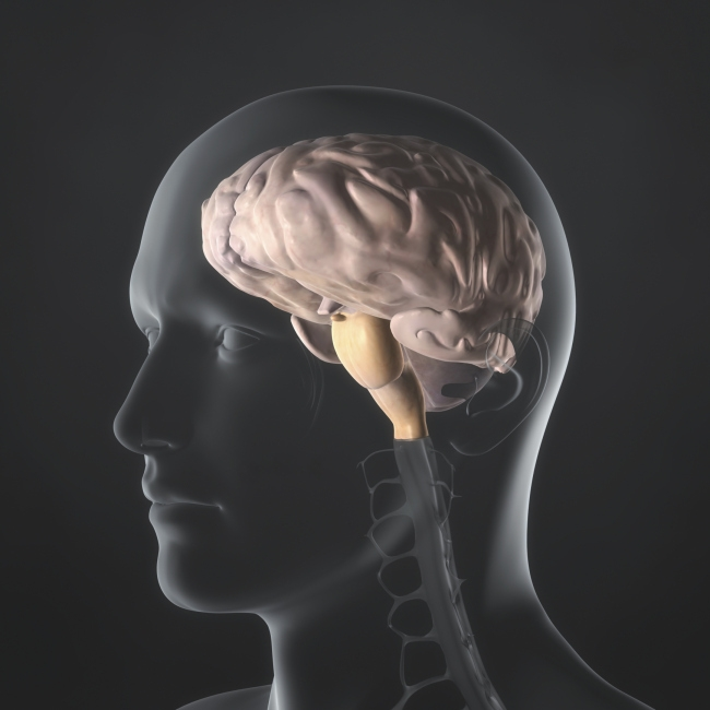 [사진설명=뇌동맥류ㆍ뇌졸중 등 뇌관련 질환이 지속적으로 증가하고 있다. 헤럴드DB]