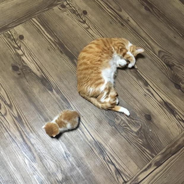 """""""이랬던 고양이를.."""" 과체중 부른"""