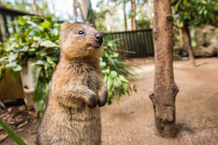골드코스트 커럼빈 야생동물원 와일드라