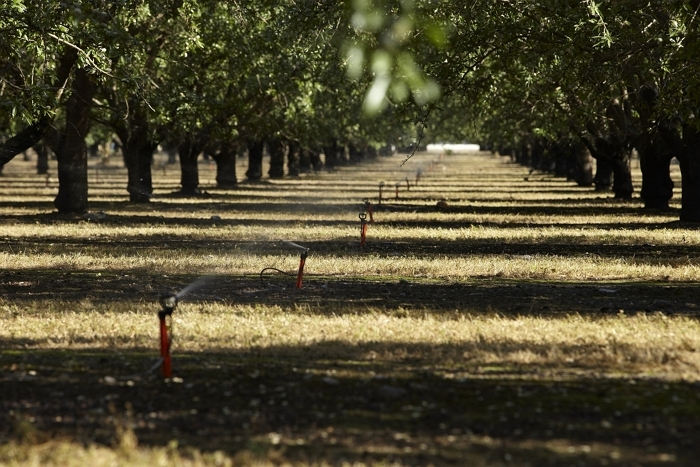 캘리포니아 아몬드 농장 내 관개 시스템