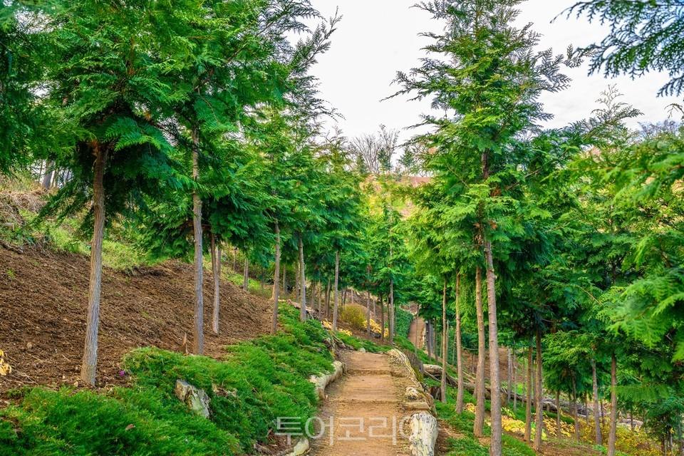 편백나무숲_빼곡히 자리한 편백나무, 앞으로가 더 기대되는 숲이다