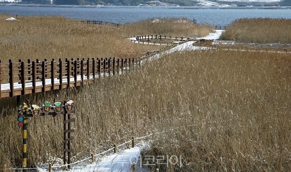 서천 신성리갈대밭