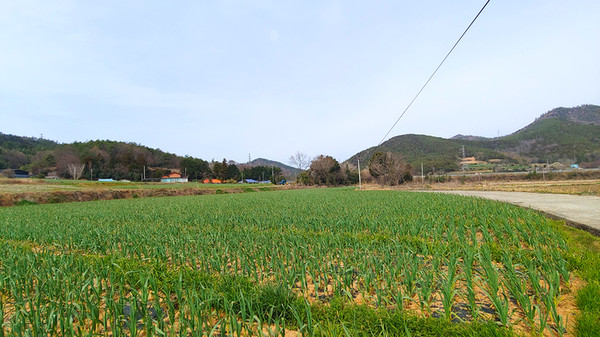 마을로 굽어지는 길. 길의 좌측엔 달마산이, 우측엔 두륜산이 자리하고 있다.