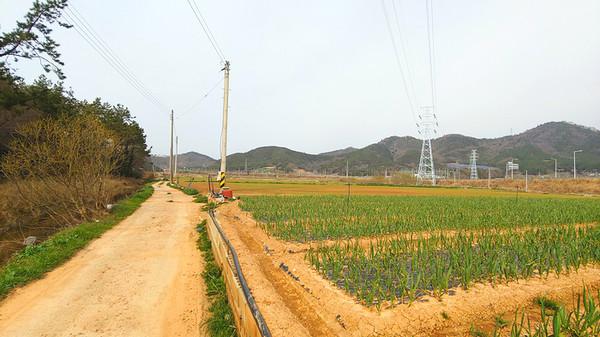 솔미들을 따라 밭과 논을 가로지른다.