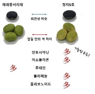 [농촌진흥청 제공]