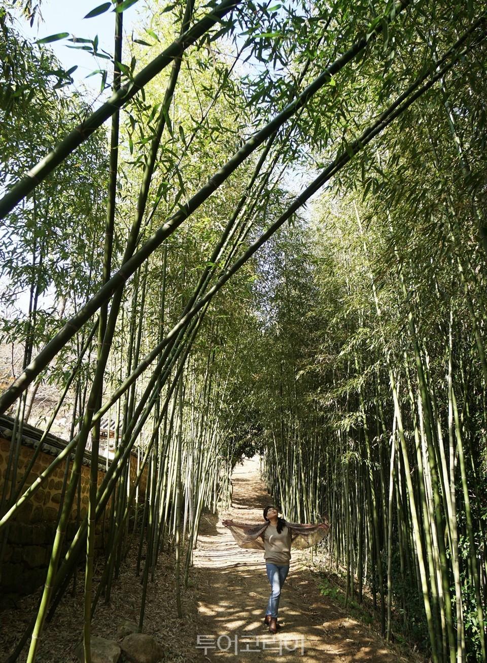 왕대나무숲 '12경운당원'