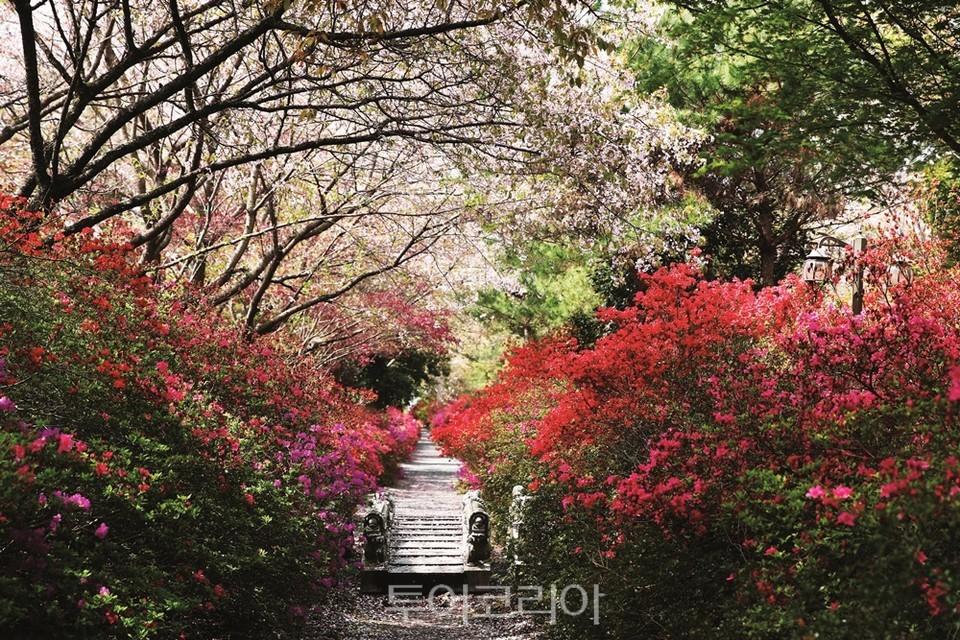 강진 남미륵사의 봄 / 사진-강진군