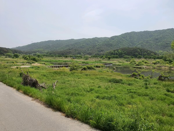 잘 조성된 황룡강의 습지 풍경. 맞은편 산은 어등산이다.