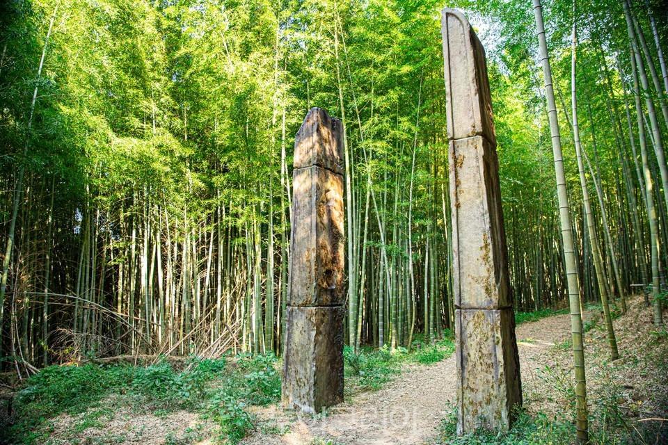 김해 진례대나무