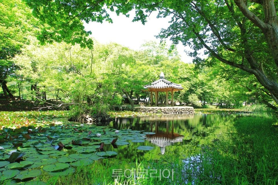 고성 장산숲