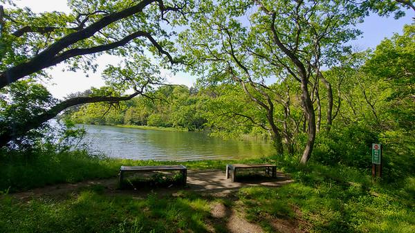 녹음이 우거진 호수는 그 자체로 힐링이다.