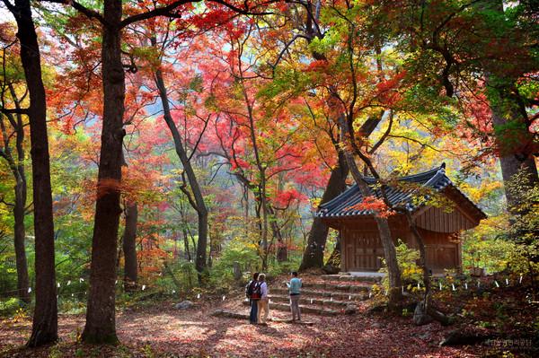 치악산 성황림 (사진제공 국립공원공단_박윤준)