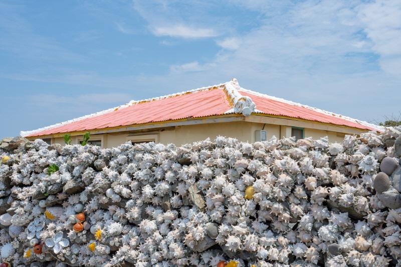 가파도 마을길에서 만난 소라껍데기 담벼락