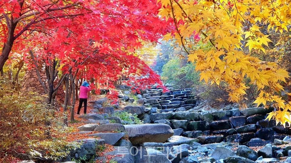 단풍으로 곱게 물든 비슬산의 가을