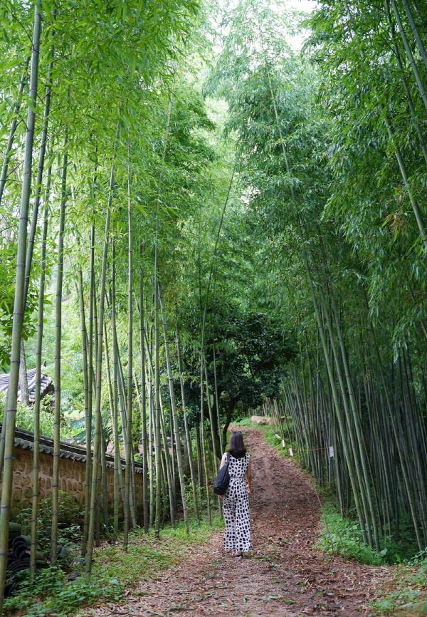 백운동 원림 왕대나무숲